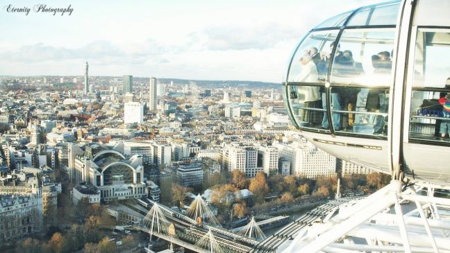 London eye (of avian perspectives)