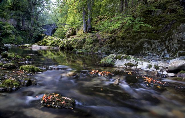Tollymore forest Park, Severné Irsko